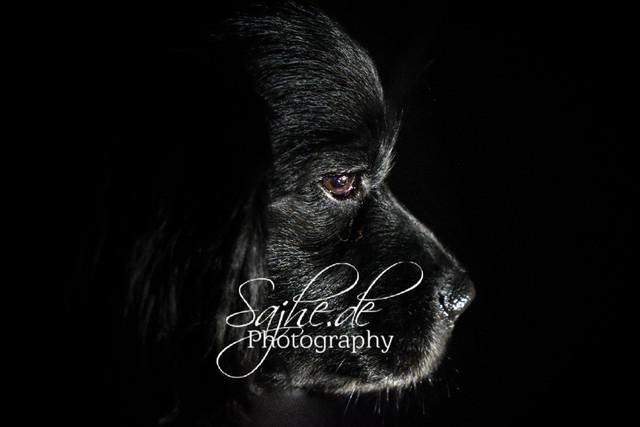 Gismo  | Lowkey Aufnahme meines Hundes