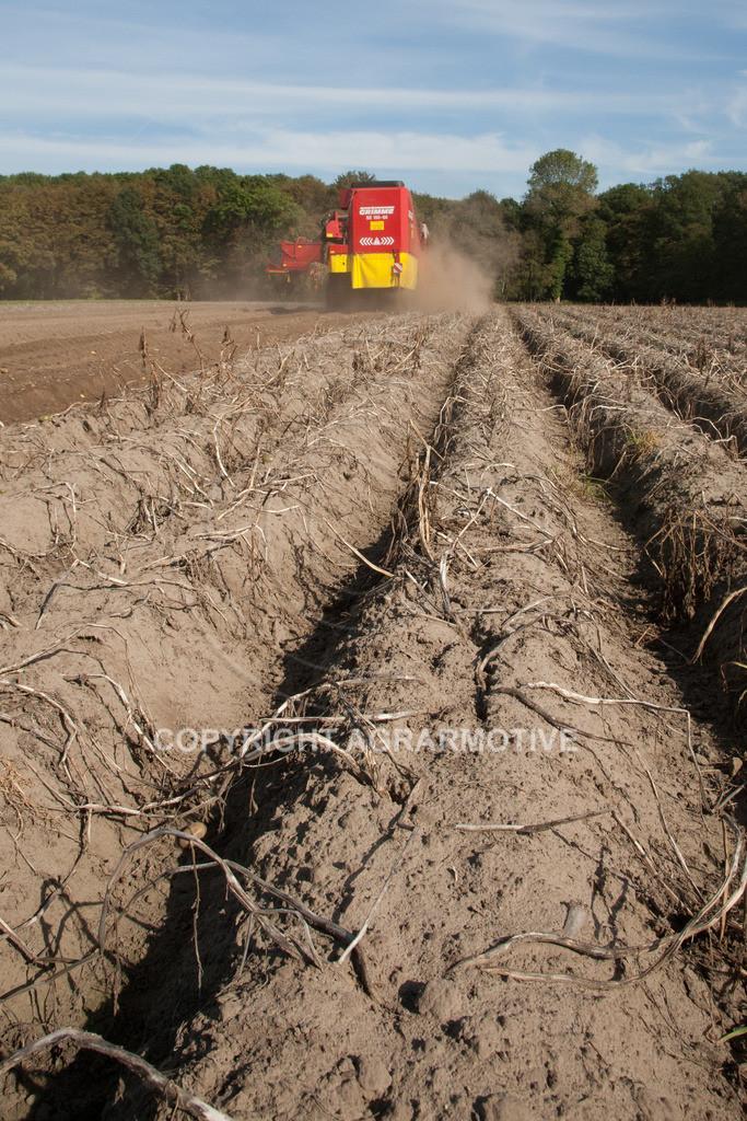 20110929-IMG_5853 | Ernte auf einem Kartoffelfeld - AGRARBILDER