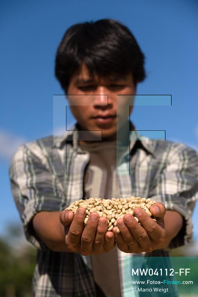 MW04112-FF | Laos | Paksong | Reportage: Kaffeeproduktion in Laos | Kaffeebauer Thao Khamkong mit ungerösteten Kaffeebohnen. In den Plantagen auf dem Bolaven-Plateau gedeihen Sträucher der Kaffeesorten Robusta und Arabica.  ** Feindaten bitte anfragen bei Mario Weigt Photography, info@asia-stories.com **