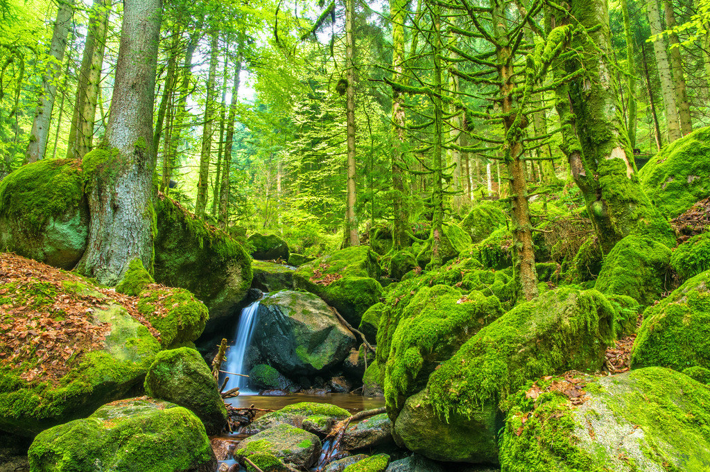Gertelbach | Idyllischer Bachlauf im wild-romantischen Gertelbachtal im Nordschwarzwald