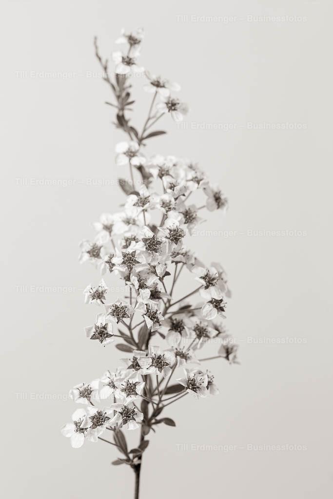 20200413_Frühlingsblüten_0004
