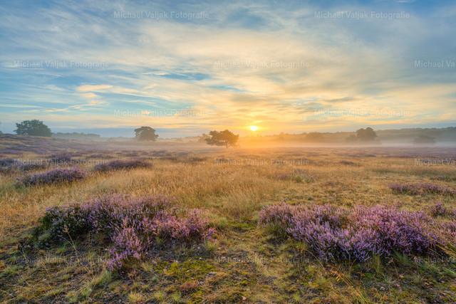 Sonnenaufgang in der Westruper Heide | Langsam kommt die Sonne empor in der nebligen Heidelandschaft bei Haltern am See im Münsterland.