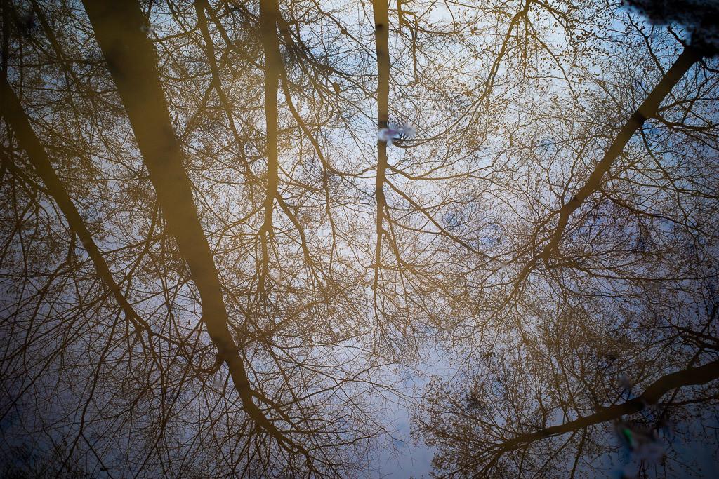 Reflexionen eines Waldes | Spiegelung in einer Pfütze, inkl. bewusster Störungen des Bildes