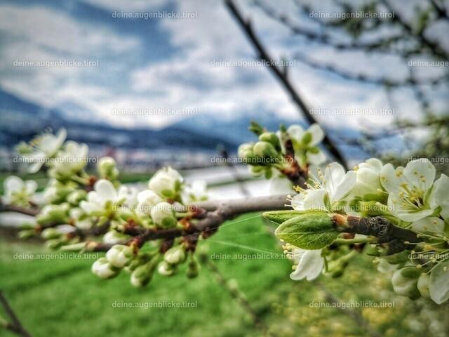 IMG_20200409_115318-01 | Obstblüte in Tirol