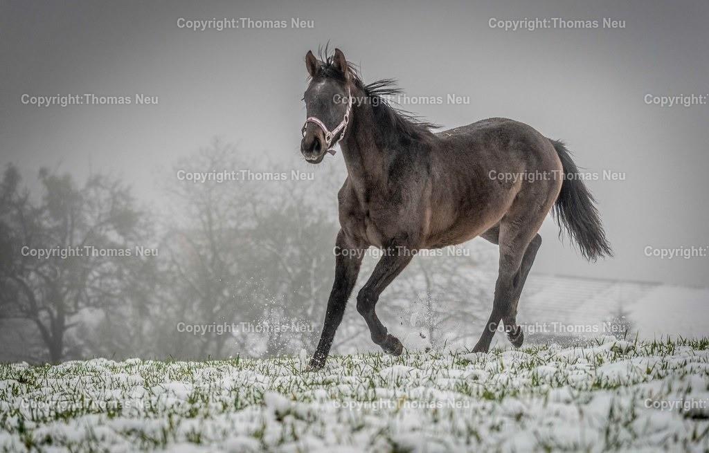 Winter_Pferde | Lautertal, Breitenwiesen, und ploetzlich war Schnee auf der Weide, Bild: Thomas Neu