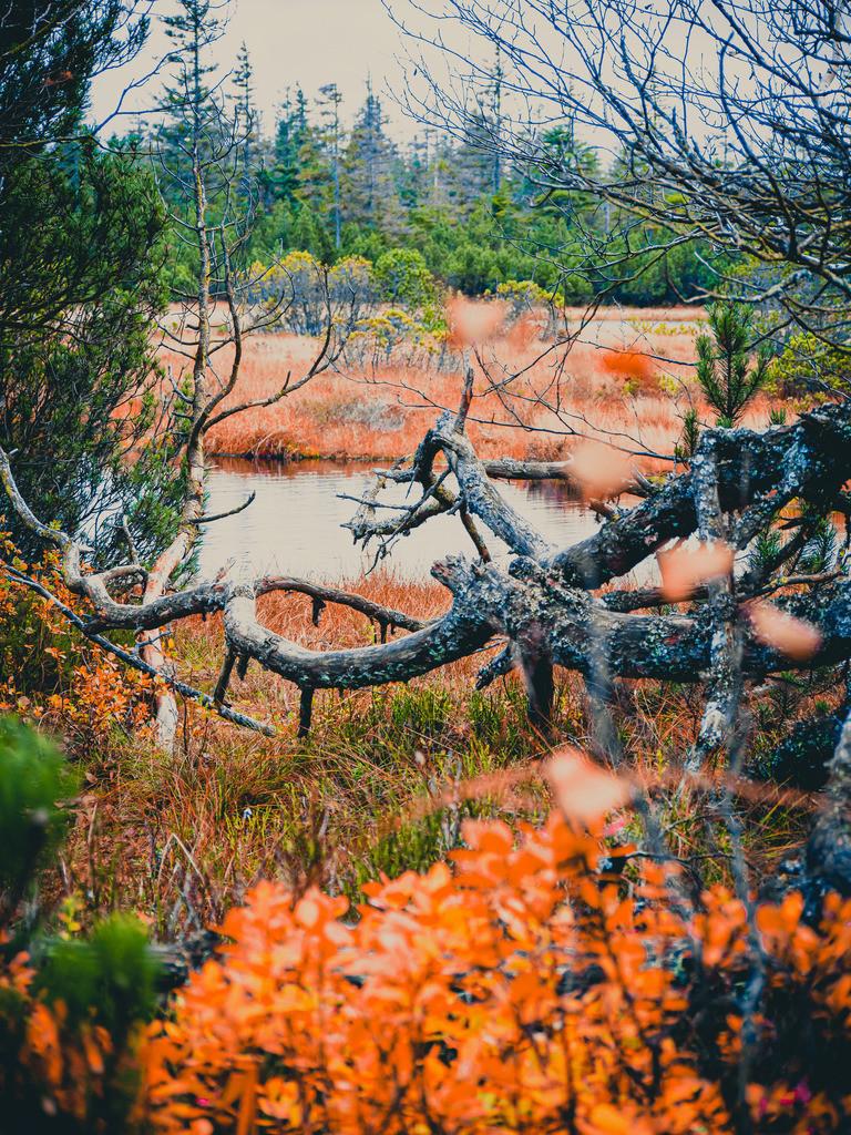 Hochmoor Kaltenbronn | Herbstliche Hochmoorlandschaft am Kaltenbronn bei Bad Wildbad