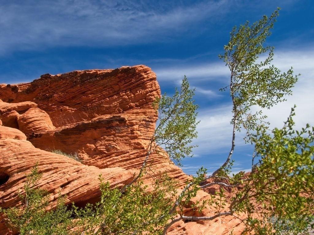 Geschwungene Birke | Sandsteinformation im Valley of Fire State Park, Nevada, USA