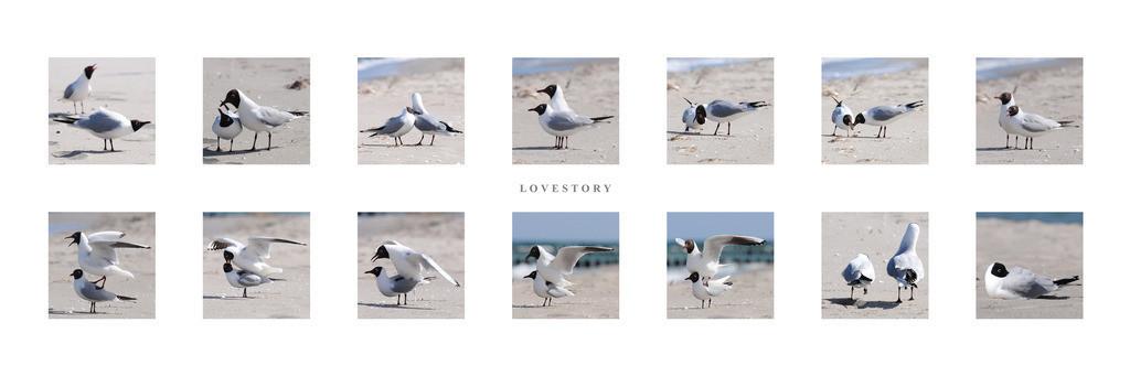 180x60_lovestory