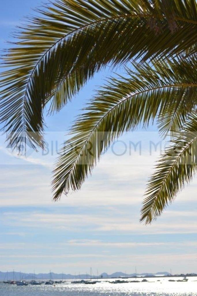 Bilder vom Meer   Palmen am Ufer des Mar Menor