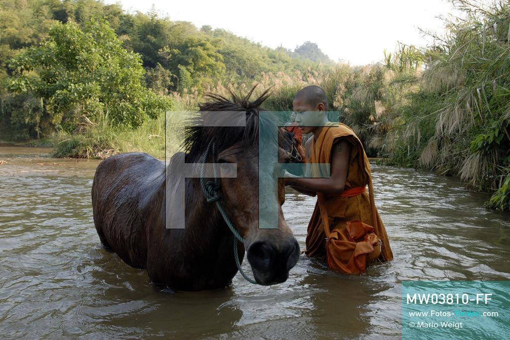 MW03810-FF | Thailand | Goldenes Dreieck | Reportage: Buddhas Ranch im Dschungel | Junge Mönche mit ihren Pferden im Fluss.  ** Feindaten bitte anfragen bei Mario Weigt Photography, info@asia-stories.com **