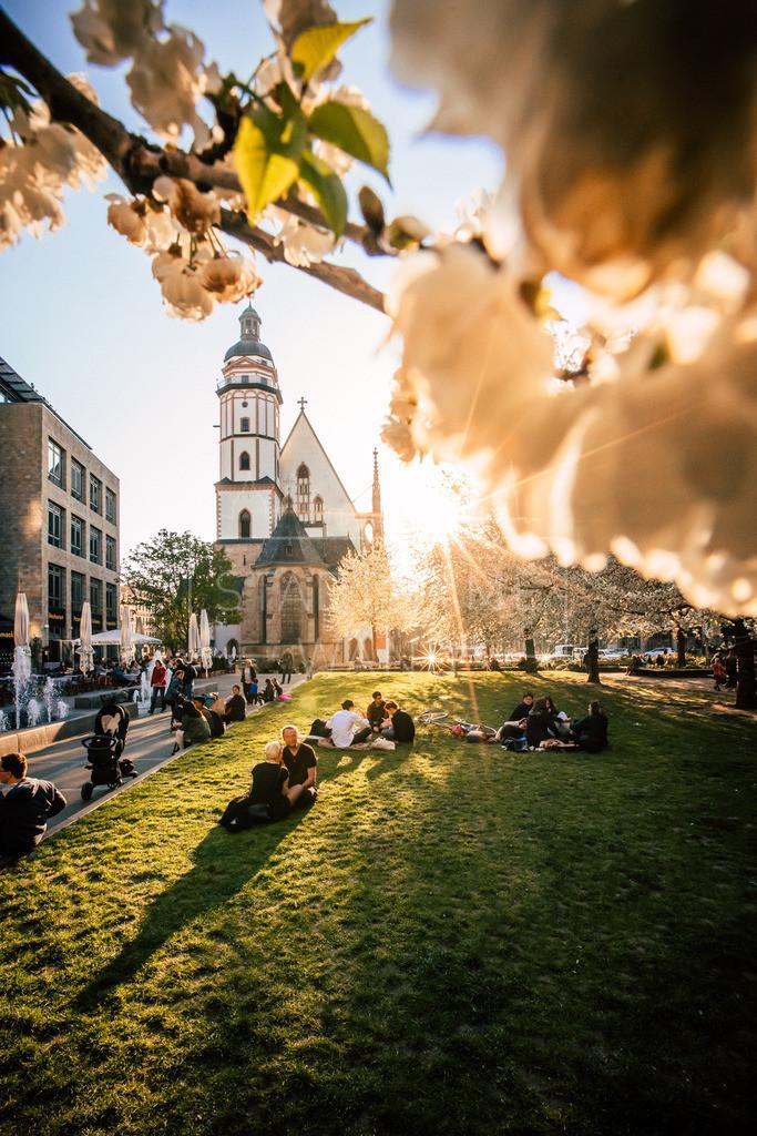 Bütenpracht vor der Thomaskirche | Leipzigs Thomaskirche im Licht der Frühlingsblüten. Die Sonne macht aber auch wieder volles Programm.