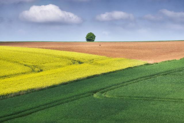 Farben und Formen | Wenn die Felder blühen und die Sonne strahlt, wartet der Frühling mit prachtvollen Farben auf.