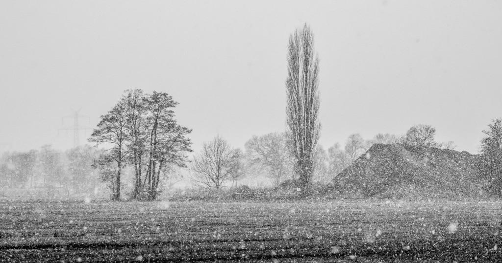 130330_1107-4968 | Teufelsmoor im Winter