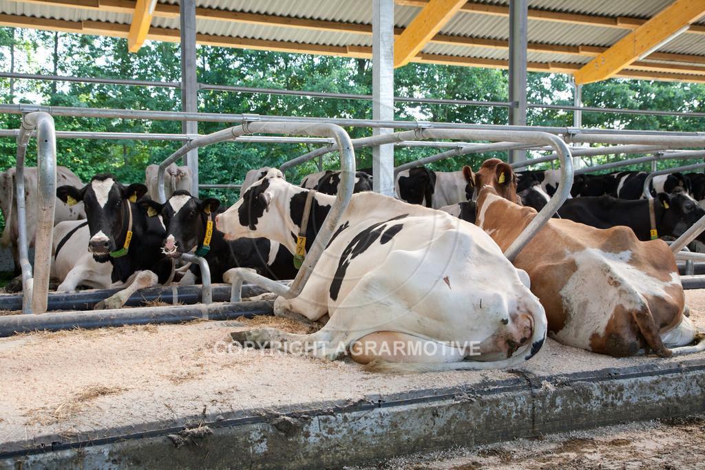 20110627-IMG_3075   Milchkühe im Boxenlaufstall