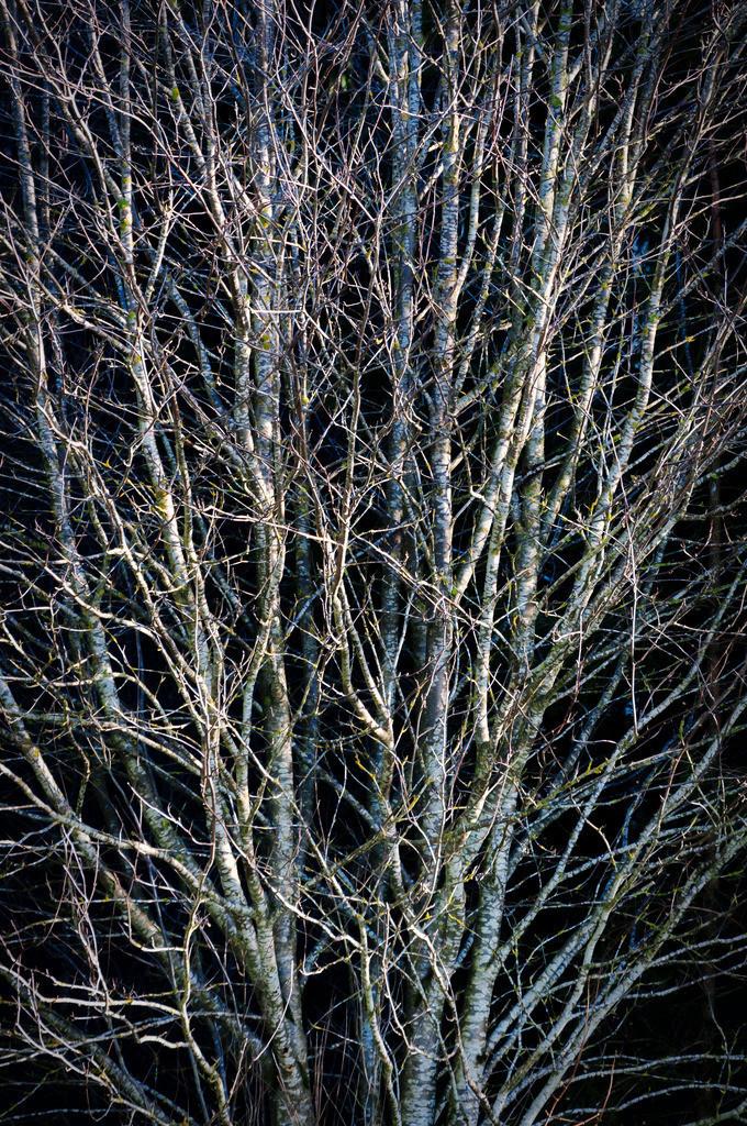 Winter Light Limited | Limitierte Edition mit 10 Exemplaren / 7 Bilder sind noch erhältlich