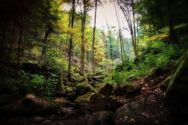 Geheimnisvoller Wald | Waldlichtung, geheimnisvoll und verwunschen