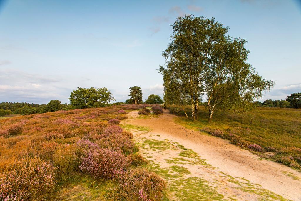 JT-171112-083 | Die Westruper Heide, im Naturpark Hohe Mark Westmünsterland, bei Haltern, Heideblüte,