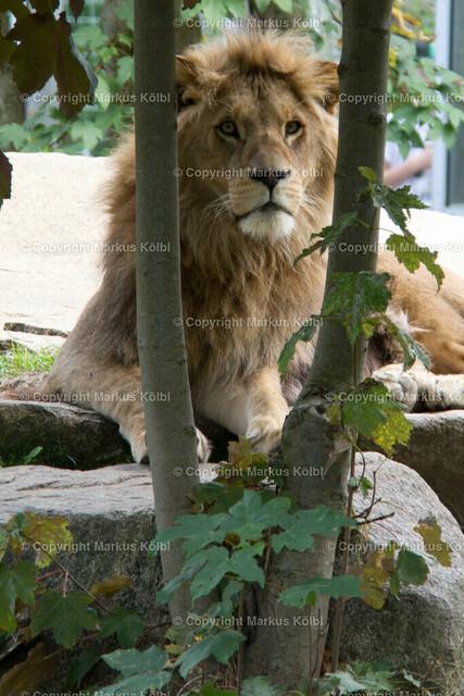 Tierpark-001