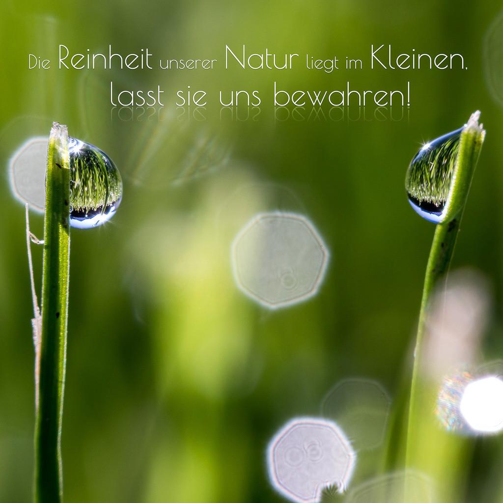 Die Reinheit unserer Natur liegt im Kleinen, lasst sie uns bewahren!