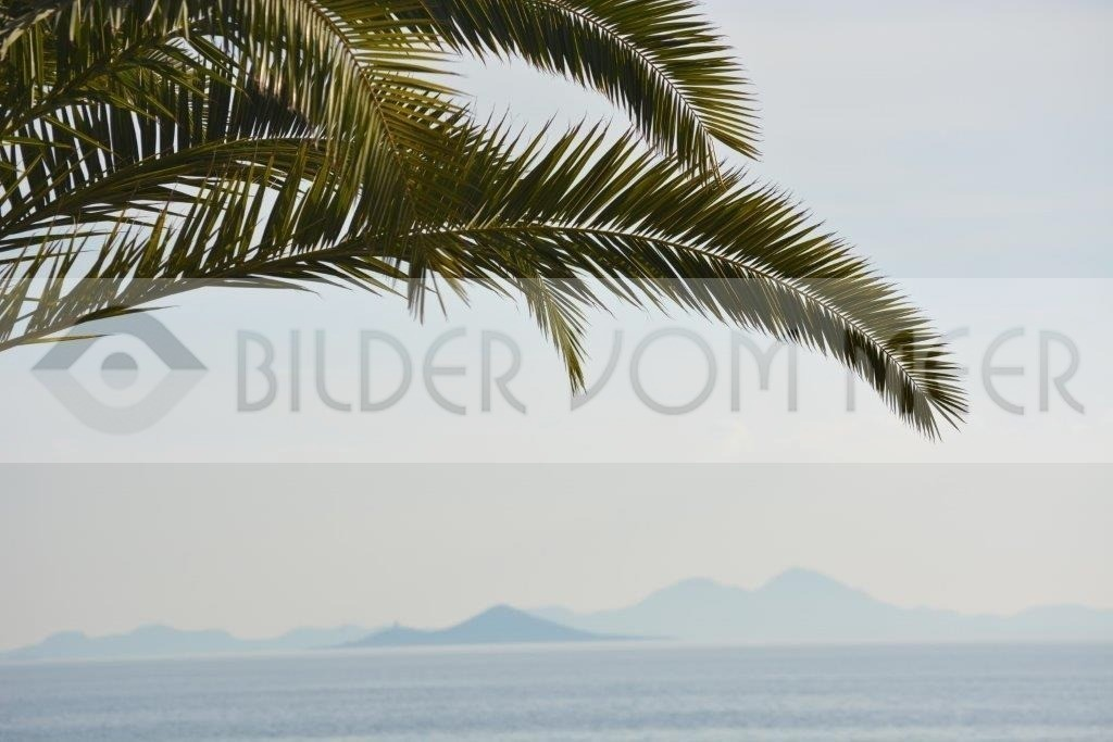 Bilder vom Meer | Palmenwelt am Mar Menor