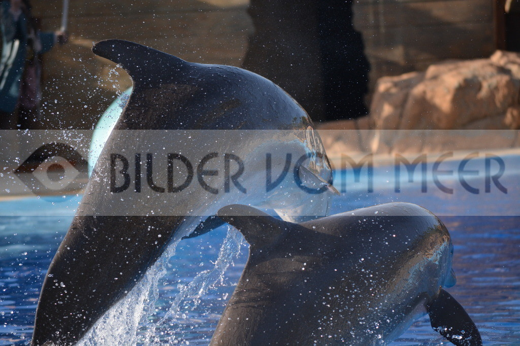 Delfin Bilder | Foto springende Delfine Spanien