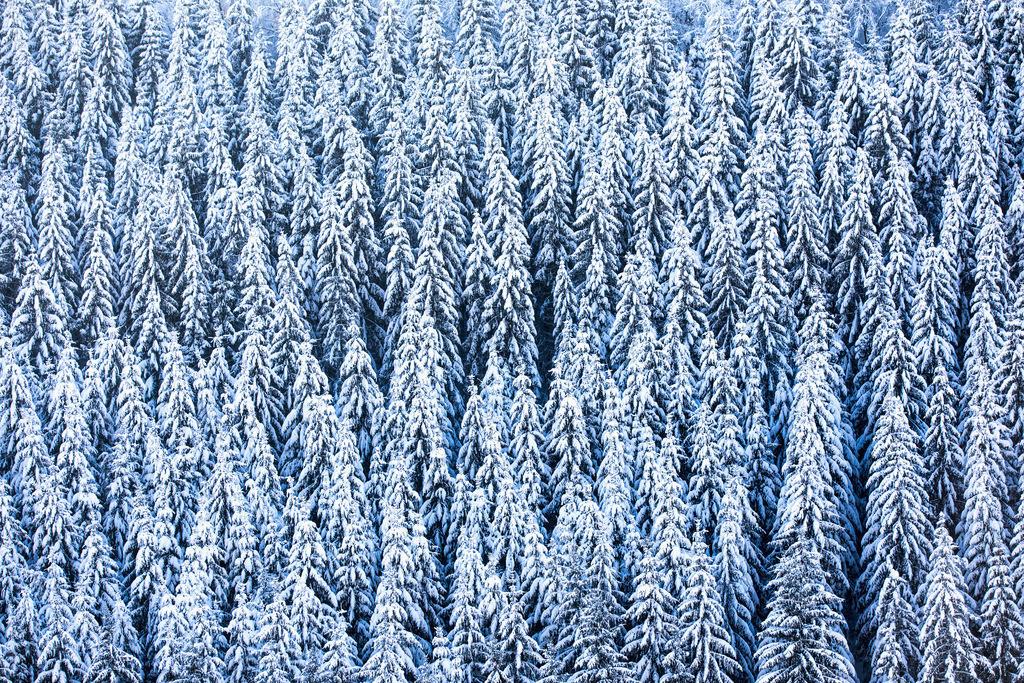 JT-170116-052 | Winter im Sauerland, NRW, verschneite Tannen,