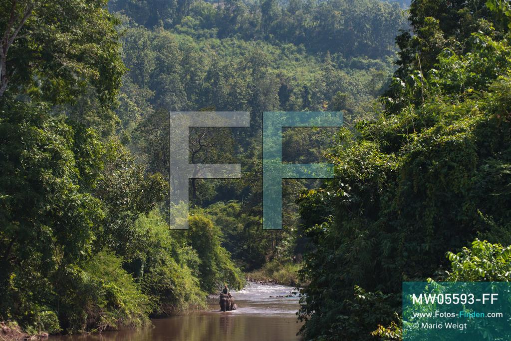 MW05593-FF | Laos | Provinz Sayaboury | Reportage: Arbeitselefanten in Laos | Arbeitselefant zieht Baumstämme durch den Fluss zum Holzfällercamp.  Lane Xang -