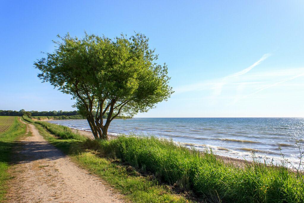 Frühling an der Ostsee   Weg am Meer in Waabs
