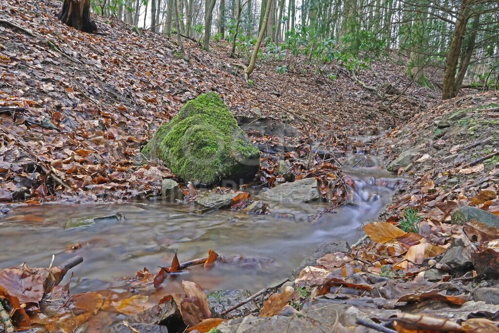 Bachlauf im Wald   Ein Bach bahnt sich seinen Weg an einem Felsen im Wald vorbei.