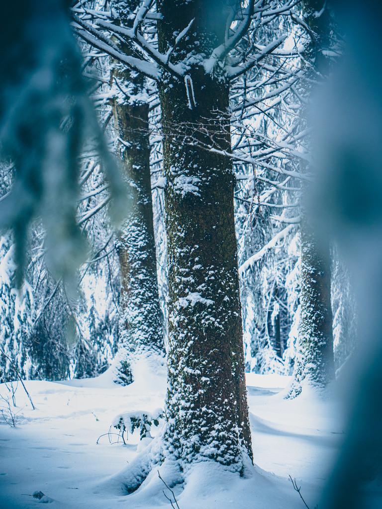Schneezauber | Wintertraum im Schwarzwald