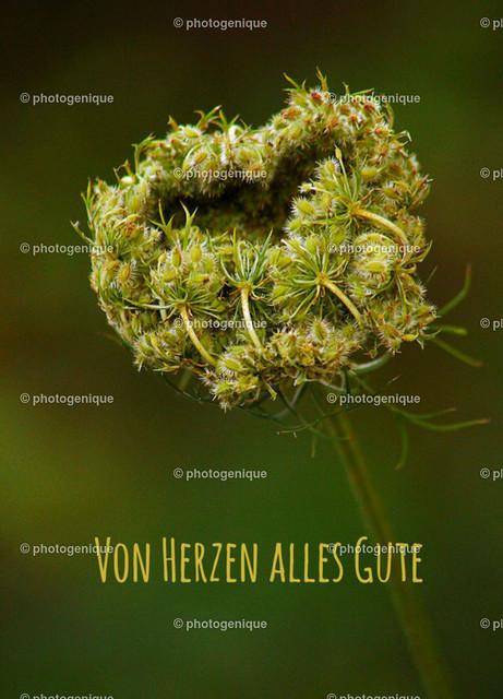 Geburtstagskarte Wilde Möhre: Von Herzen alles Gute   Postkarte Geburtstagskarte mit einzelne Blüte einer wilden Möhre in Herz-Form bei Tageslicht vor einem grünen Hintergrund und dem Text Von Herzen alles Gute