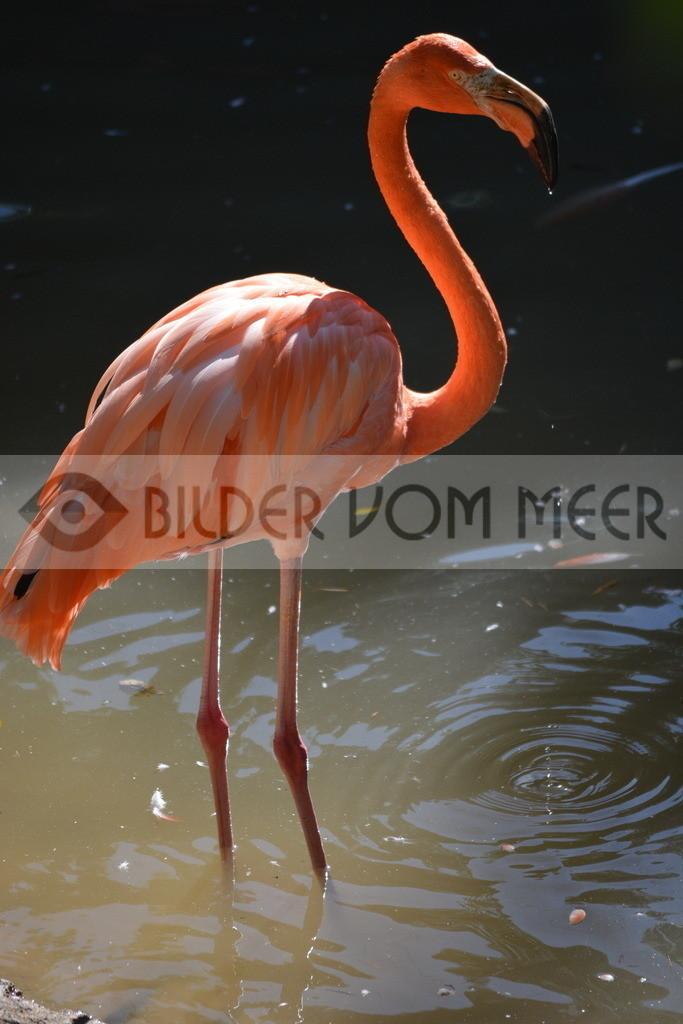 Flamingo Bilder   Flamingo Bilder aus Italien