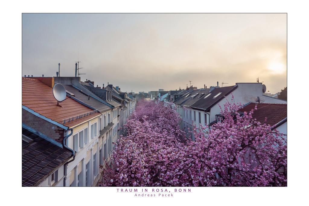 Traum in Rosa, Bonn | Die Serie 'Deutschlands Stadtlandschaften' zeigt die schönsten deutschen Städte.