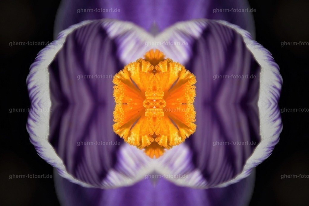 GPH_3117-dunkel (2)-sharpen-focus-kaleidoskop-169