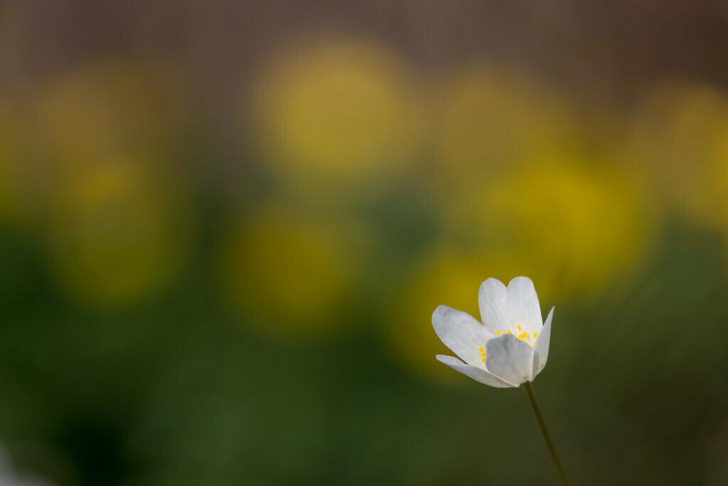 Kleine weiße Blume | Wenn alles blüht dann ist es Frühling ;-)