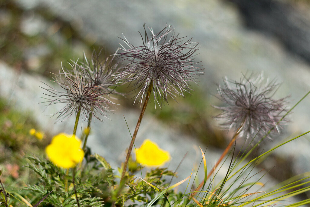 Pflanzen in den Bergen