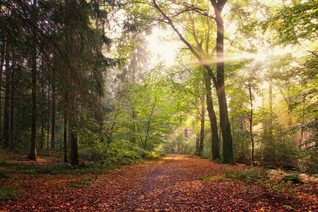 Im Garlstedter Wald | Sonnenlicht im Garlstedter Wald.