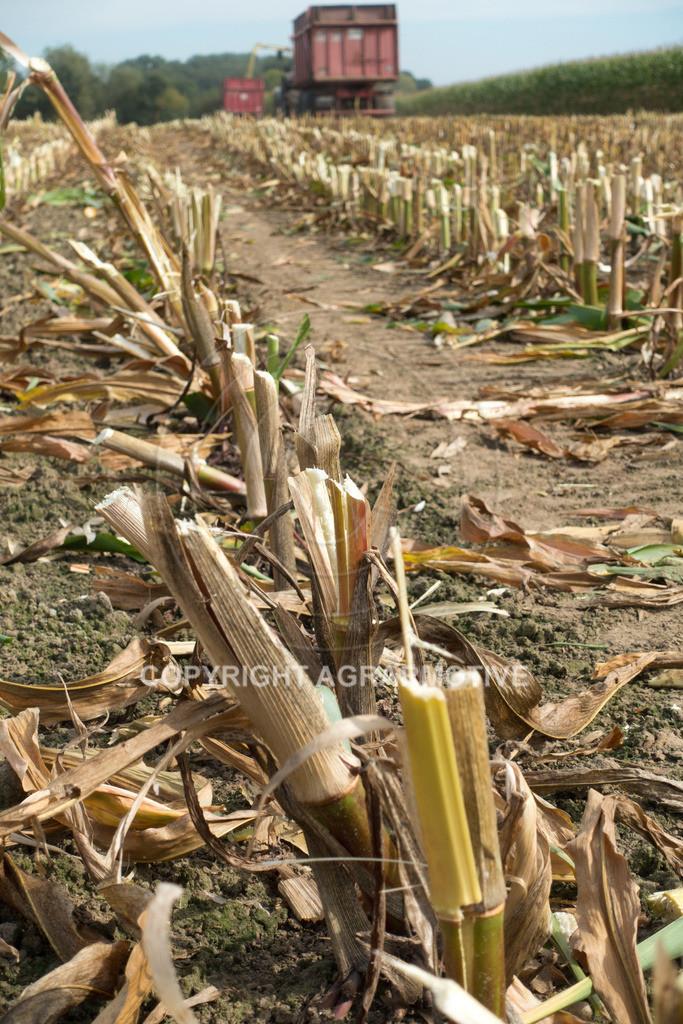 20160911-DSC00451 | Mais Ernte aus der Vogelperspektive