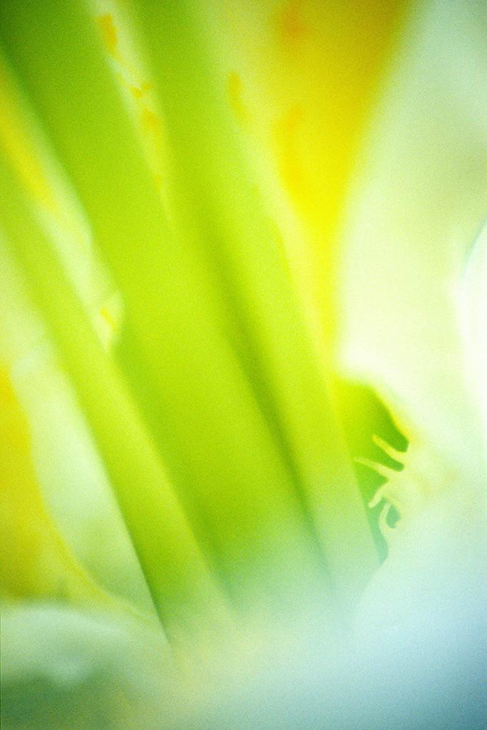 Pflanzenwelten | Triptychon Weiße Lilie I - 1 | Best. Nr. lilie0022 | Makro-Blumenportrait einer weißen Lilienblüte