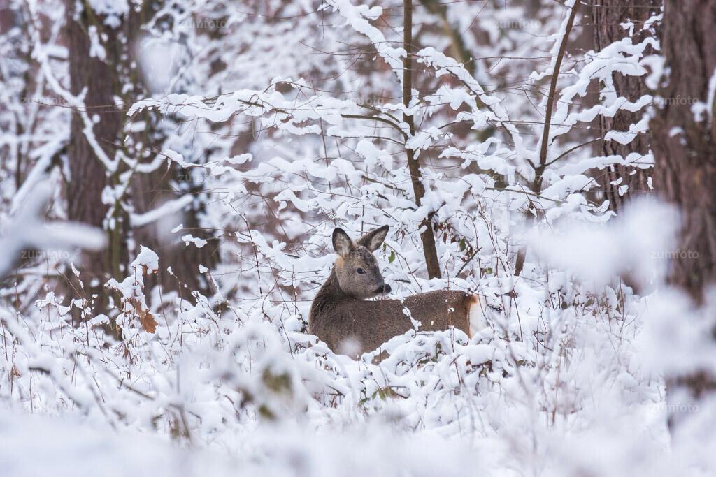 0-100104_1220-1940   Zeitreise! So kann der Winter im Dezember aussehen. Dieses Foto ist vom Huskyrennen am 05.12.2010 in Klink.