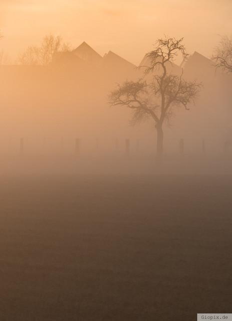 Nebel am Morgen | Baum im Nebel bei Morgendämmerung in Raderbroich