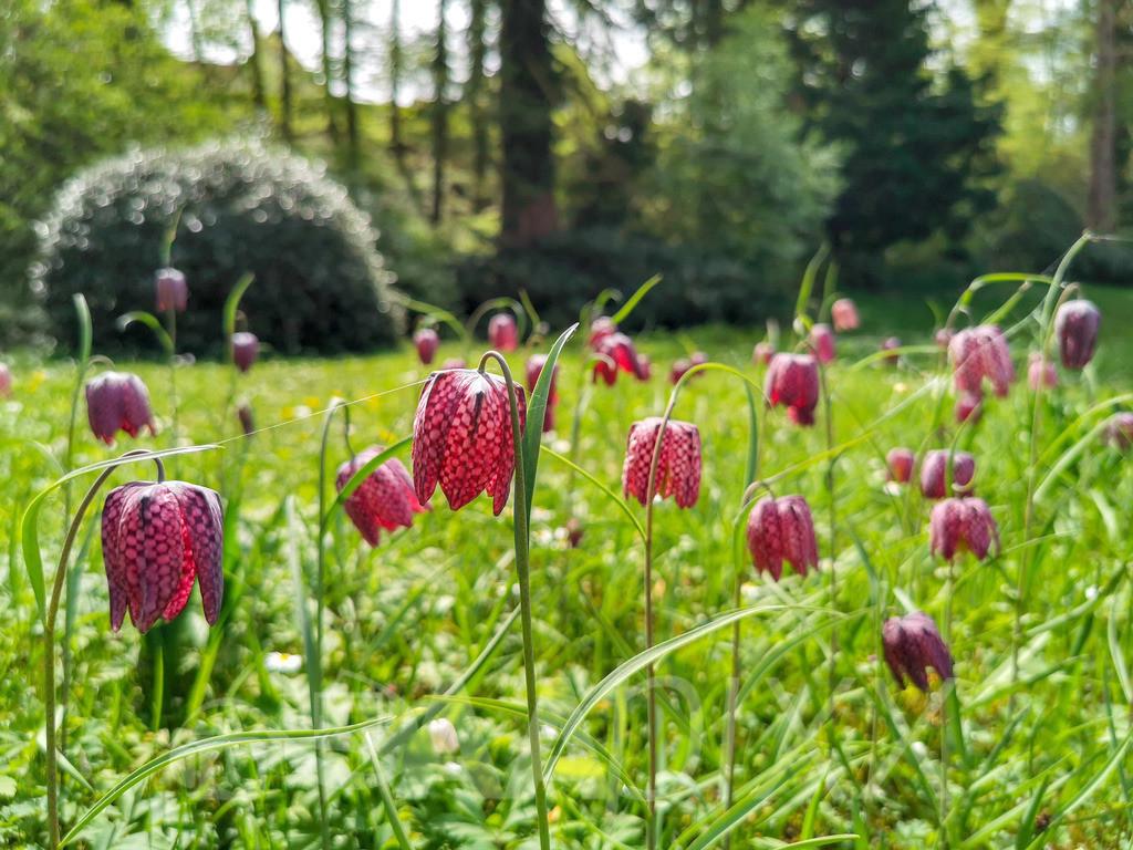 Schloss Fachsenfeld | ...7.8 Hektar großer Park mit einmaliger Flora und Fauna! www.regiocockpit.de/schlossfachsenfeld
