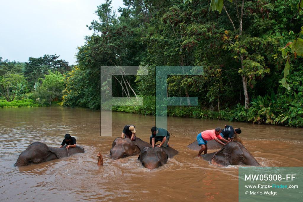 MW05908-FF | Thailand | Goldenes Dreieck | Reportage: Mahut und Elefant - Ein Bündnis fürs Leben | Bei Asiatischen Elefanten gehört das tägliche Bad zur Körperpflege. Mahuts schruppen die Haut.  ** Feindaten bitte anfragen bei Mario Weigt Photography, info@asia-stories.com **