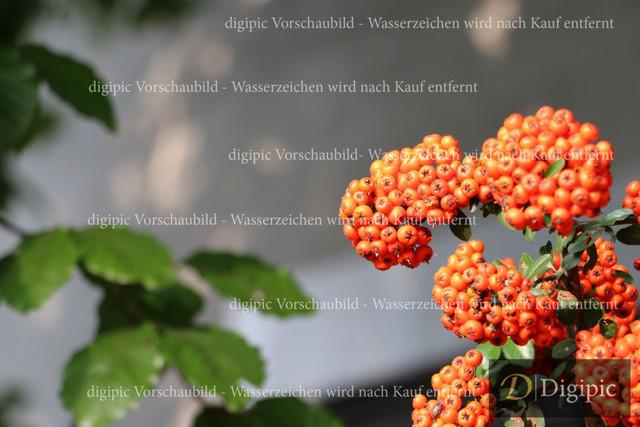 Strauch (2)-Vorschaubild
