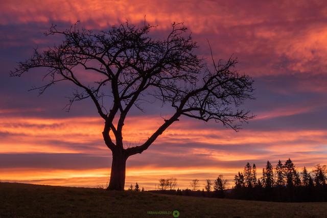Feuer   Brennender Himmel mit Baum im Vordergrund