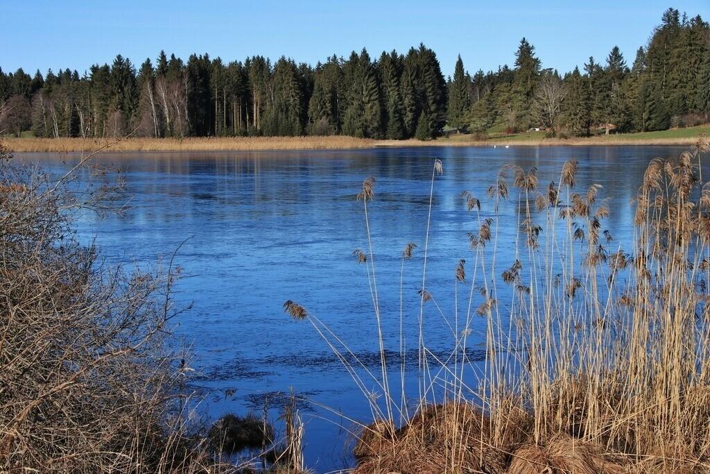 Trollweiher | Der Trollweiher bei Troll im Ostallgäu