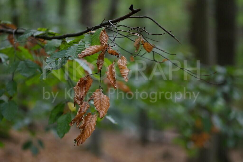 Herbstlaub   Ulmenblätter im Herbstlook.