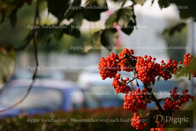 Strauch (4)-Vorschaubild