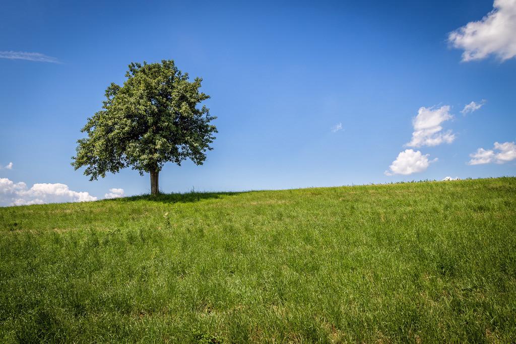 Baum auf Wiese | Baum auf Wiese