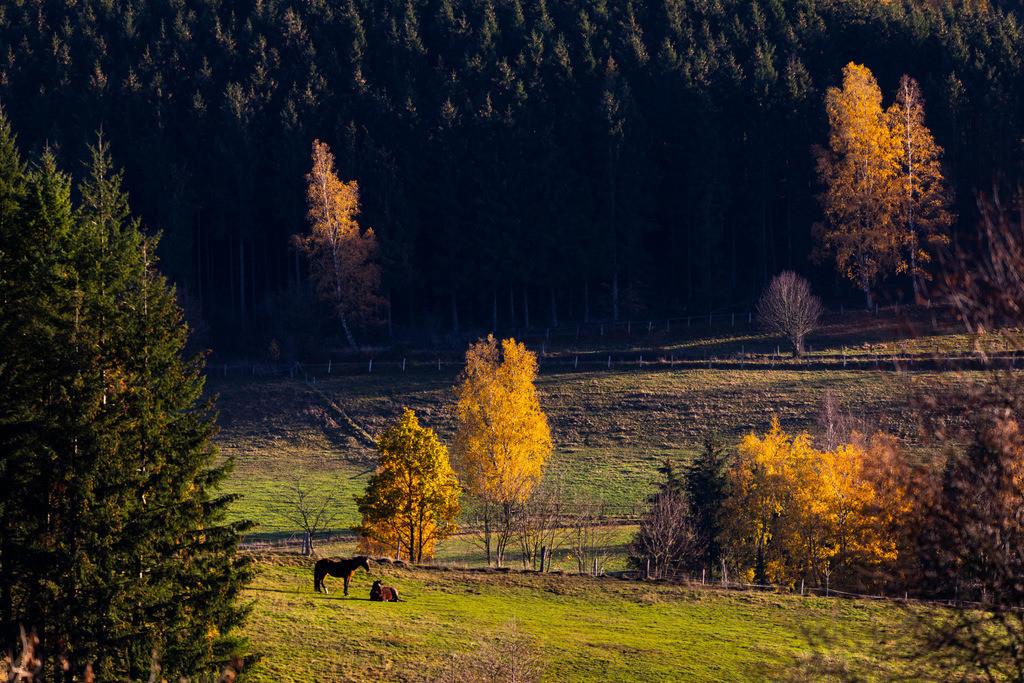 JT-181107-102   Herbstlicher Wald, Pferde auf einer Weide, in der Nähe von Bad Berleburg, Kreis Siegen Wittgenstein, im Sauerland, NRW, Deutschland, in der Nähe von